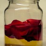 Rosenessig frisch angesetzt