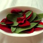 Rose-Salbei-Mischung, frisch