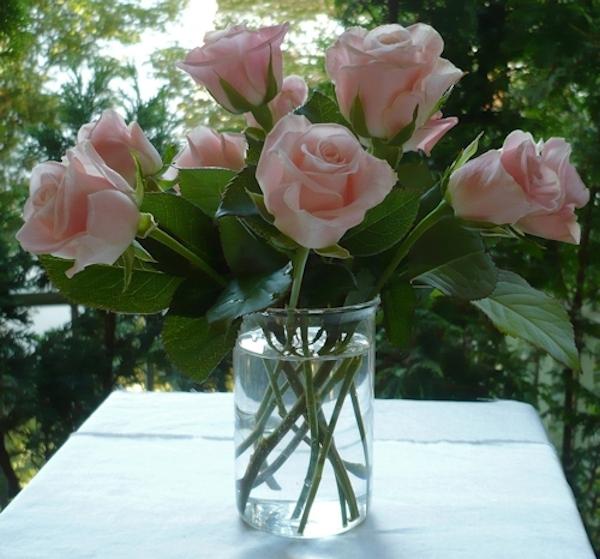 Rosenstängel ohne Blätter in der Vase