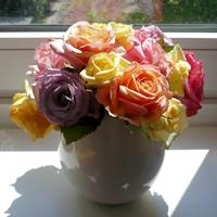 rosen-in-pastell