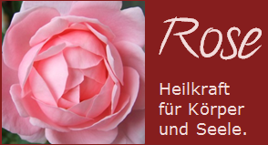 rose-heilkraft-d
