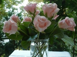 rose-staengel-in-vase-ab-268-200
