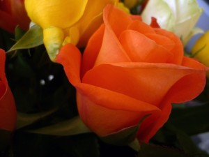 rose-farbe-orange