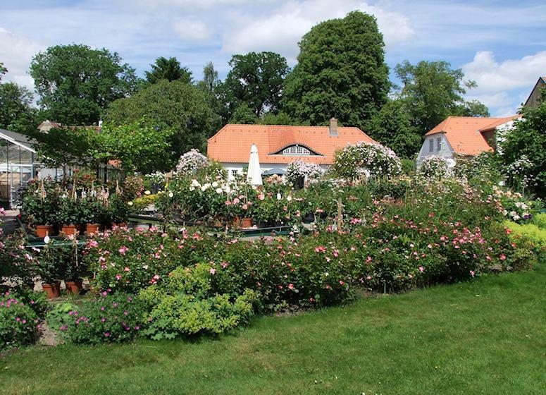 seaside garden Rosarium Glücksburg Flensburger Förde