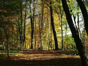 Jahreszeiten - Herbstwald