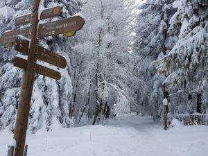 Jahreszeiten - Winterwald