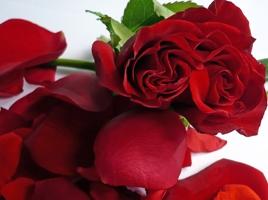 hochzeitsbrauch-rosenregen