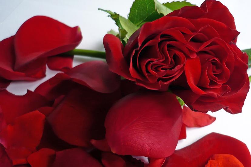 Hochzeitsbrauch-Rosenregen-mit-Rosenbluetenblättern
