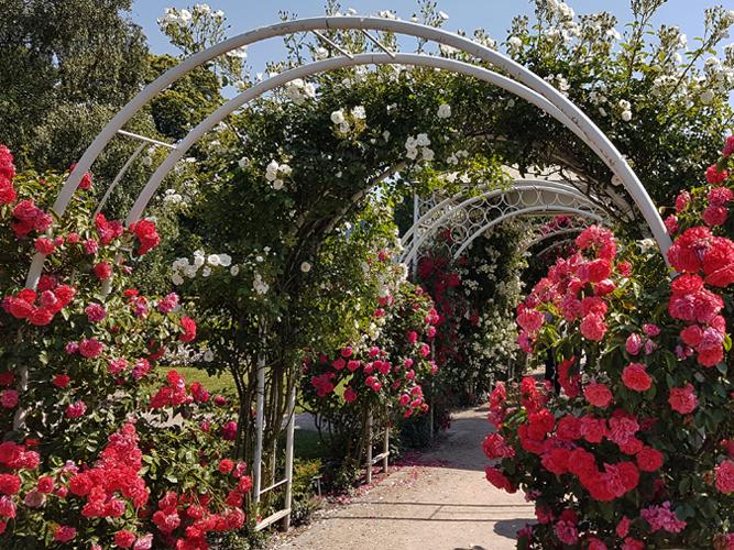 Rosenbögen auf der Hochzeitsinsel in Uetersen