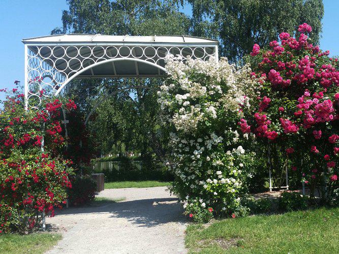 Hochzeitspavillon im Rosarium Uetersen
